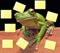 frog s